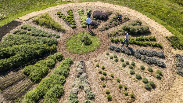 Forest Garden mit Kochen ist Emotion Unterwegs. Permakultur Wedel